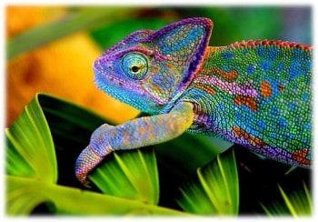 Being a Social Chameleon
